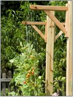 Wire Vertical Garden (Good for climbing plants)