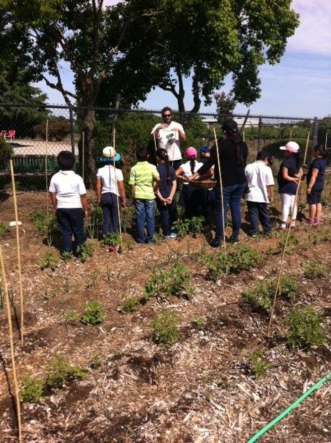 Students on field trip at farm