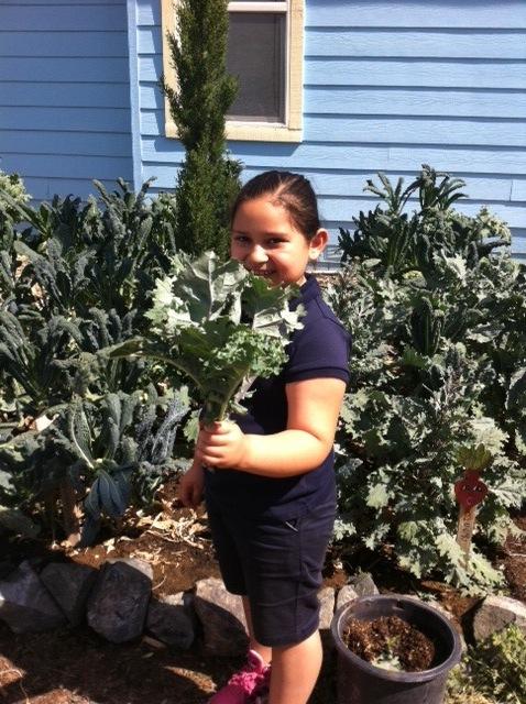 Child harvesting kale