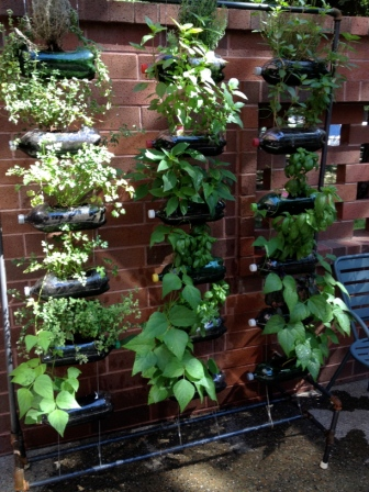 Verticial Garden 9