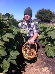A F2M employee harvesting red and green okra pods