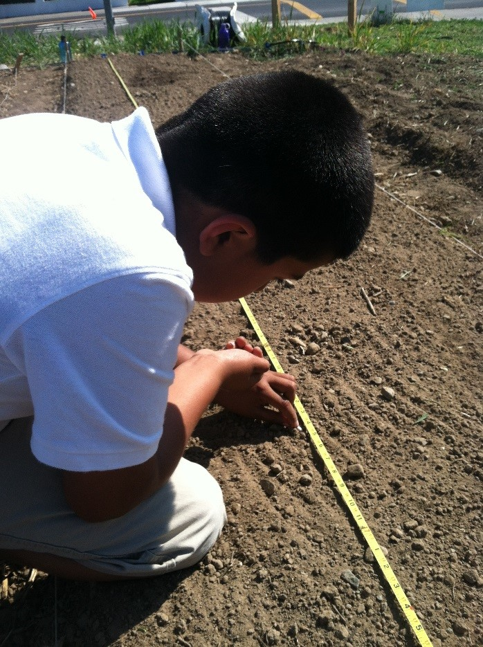 Victor concentrates while planting green beans